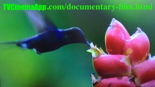 TVCinemaApp.com - Documentaries: on the life and habitats of birds and pants and the changes in this life.